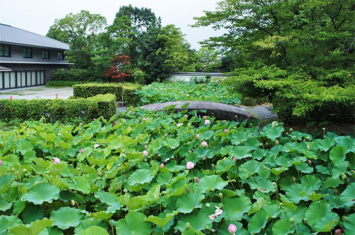 KyotoKonchiIn15.JPG