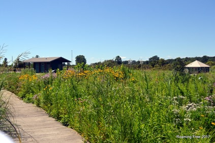 Wildflowers along the boardwalk