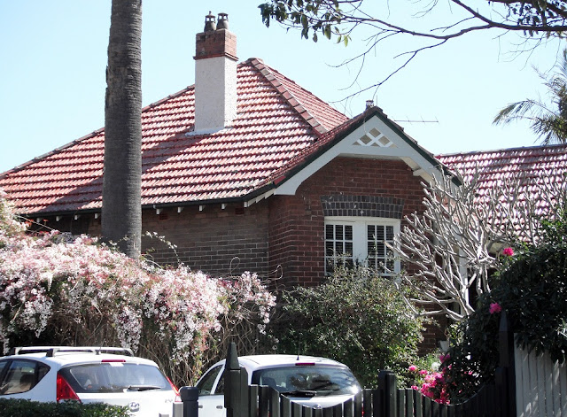 14 Deakin Avenue with flowering climbers, specimen palm at left!