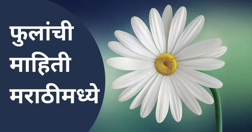 Flowers information in Marathi