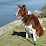Border Collie Help's profile photo