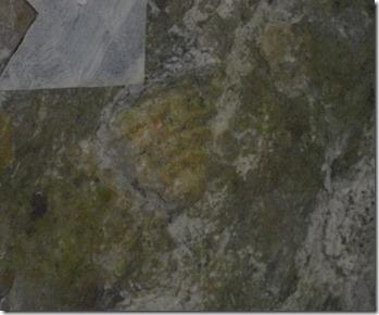 22 trilobite fossil