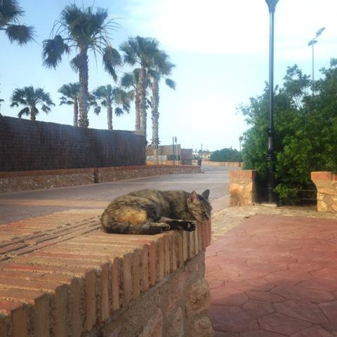 Cat sleeping Campoamar beach Orihuela Costa