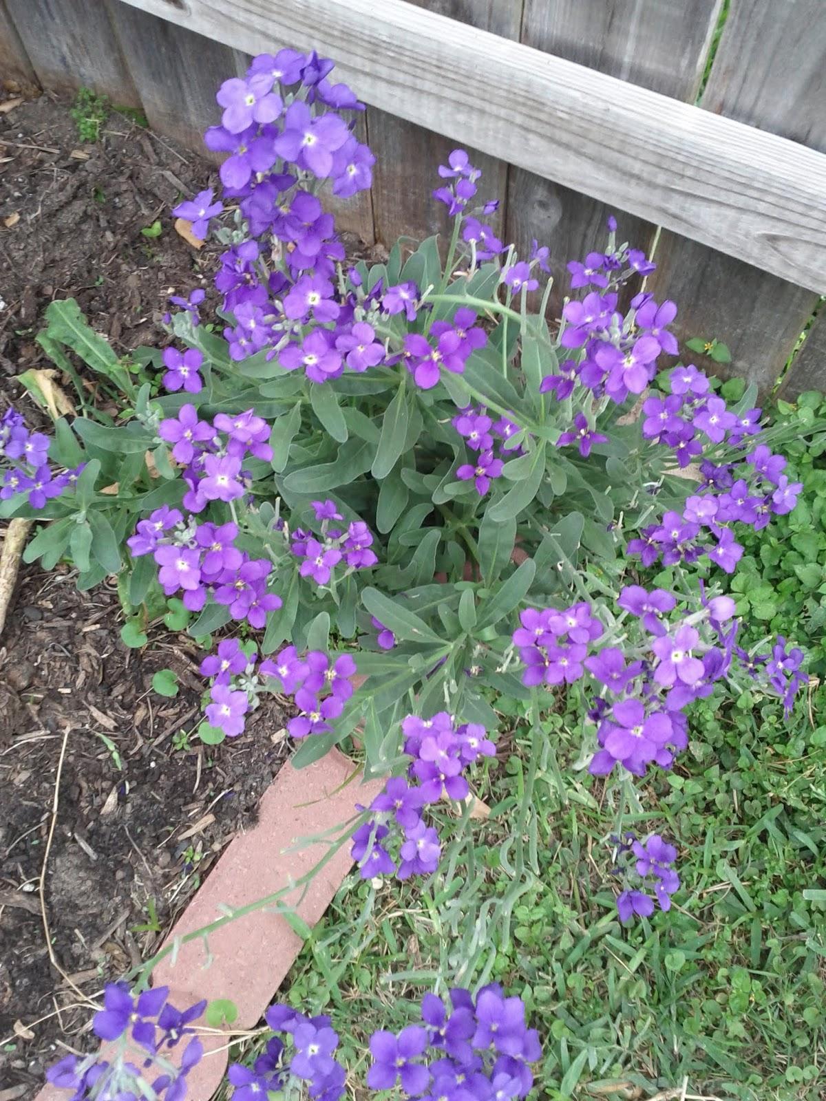 Gardening 2013 - IMG_20130330_094650.jpg