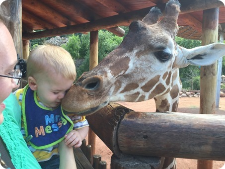 Feeding the Giraffes at Cheyenne Mountain Zoo