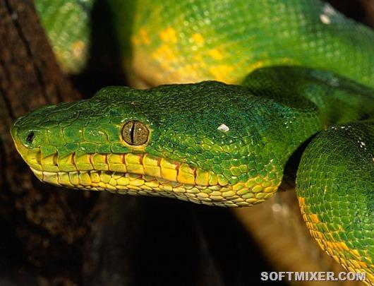 3200x2400_Зеленая-змея