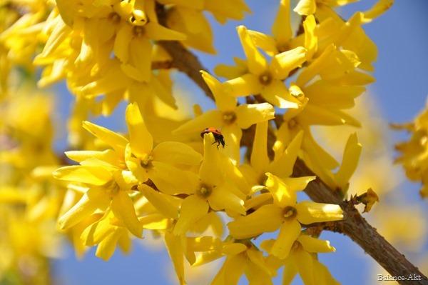 Frühlingsfreuden_2