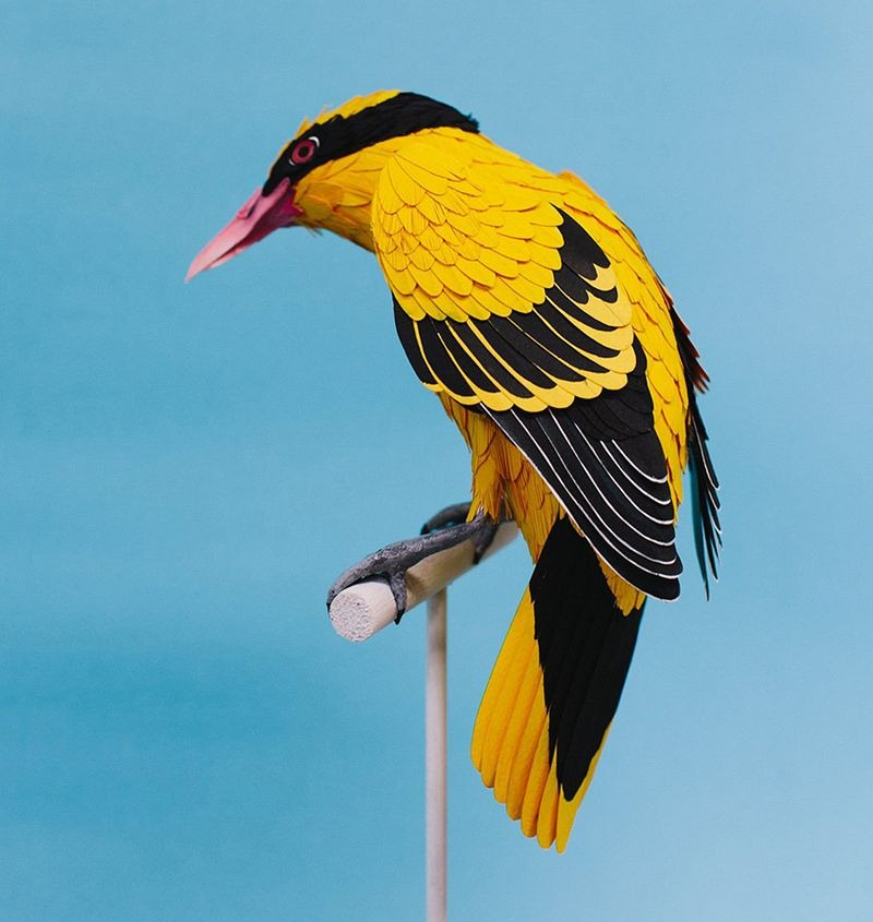 diana-beltran-herrera-birds-18