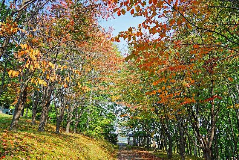 美瑛 憩々森公園 写真3