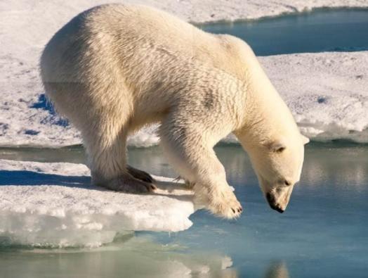 Polar Bear emails