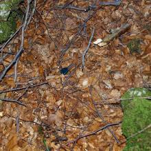 Orientacijski vikend, Črni dol 2007 - P0166082.JPG