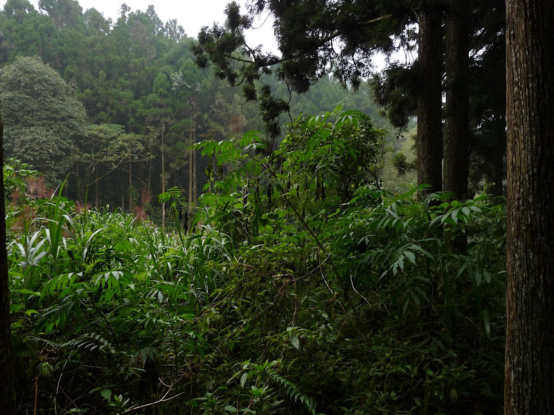 Taiwan.Chi Tou forest