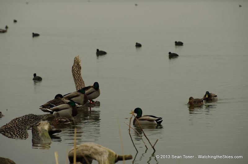 01-26-13 White Rock Lake - IMGP4325.JPG