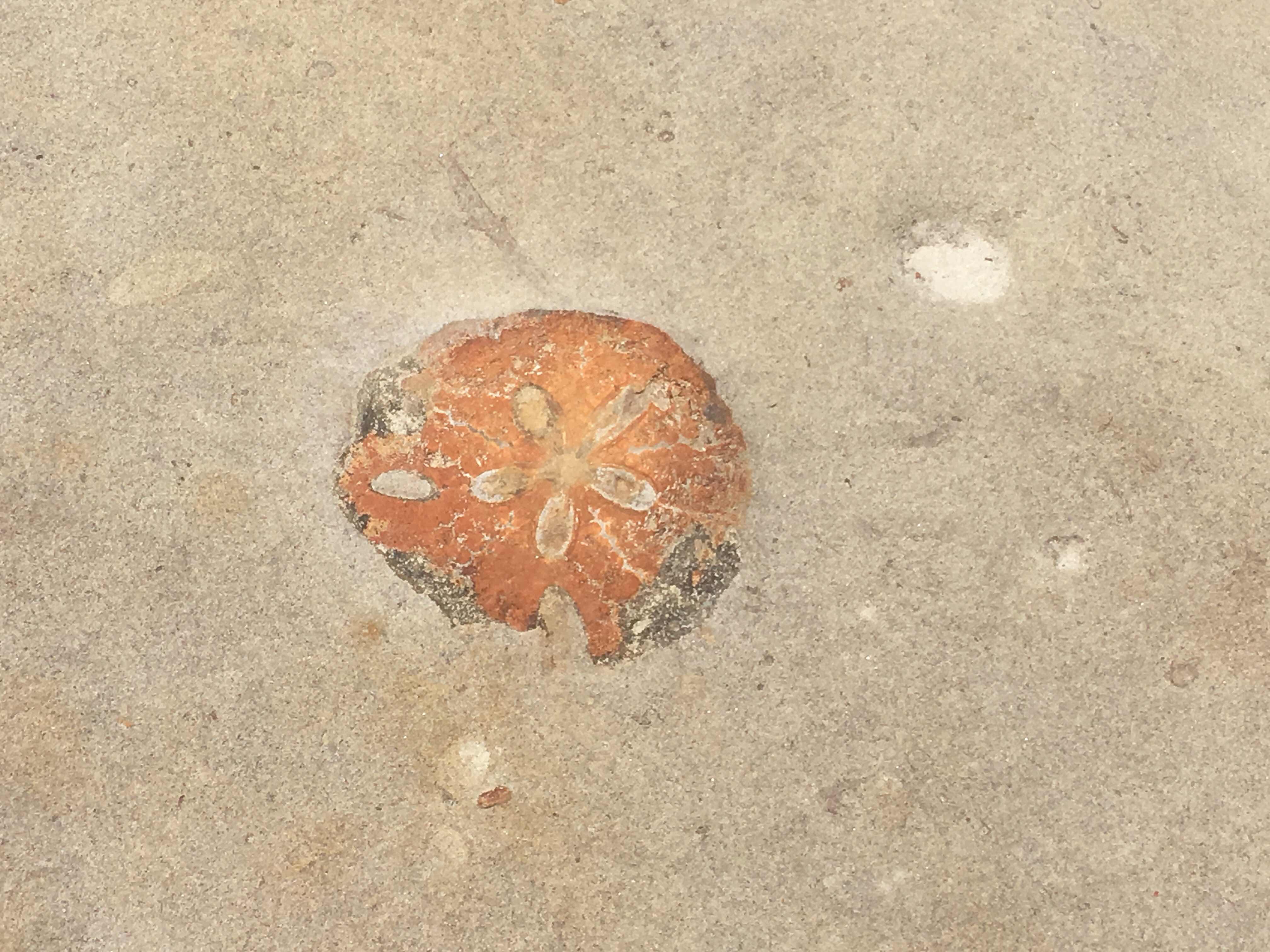 yehliu geopark queen's head yehliu peninsula north coast taipei taiwan fossil