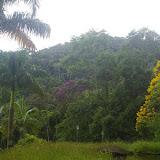 L'entrée du domaine d'Arariba. 24 février 2011. Photo : J.-M. Gayman