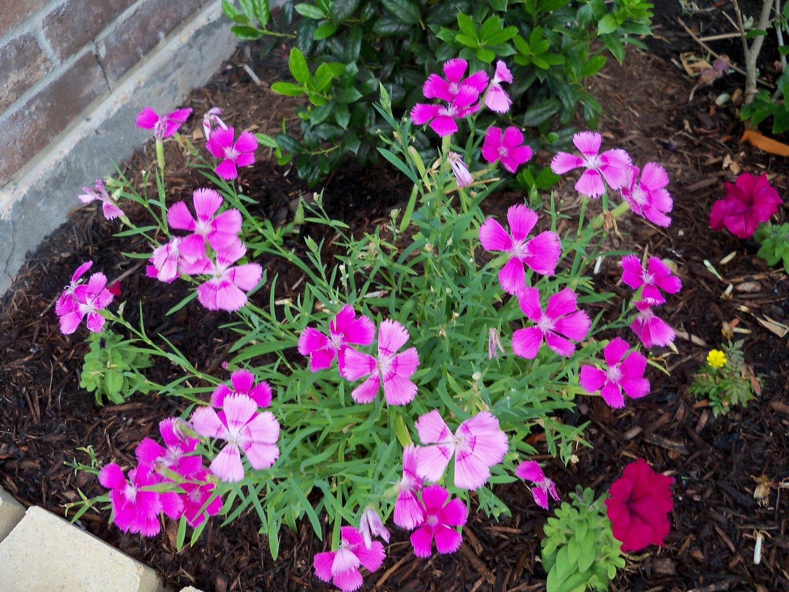 Gardening 2011 - 100_7770.JPG