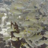 Bonaire 2011 - PICT0036.JPG