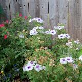 Gardening 2011 - 100_8882.JPG