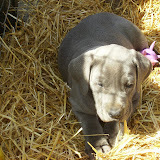 Star & True Blues February 21, 2008 Litter - HPIM1208.JPG