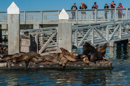 Seals aplenty. From Sea Otters, Sea Lions, and California Seals, Oh My!