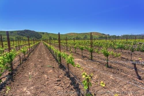 Stolo Family Vineyard Cambria California 2
