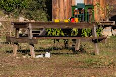 Our friendly cat, always around us!