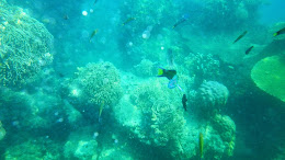 ngebolang-pulau-harapan-5-6-okt-2013-pen-13