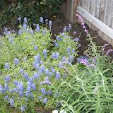 Gardening 2012 - IMG_2790.JPG
