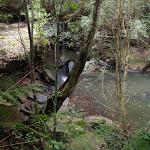 Track above Martins Falls (147126)
