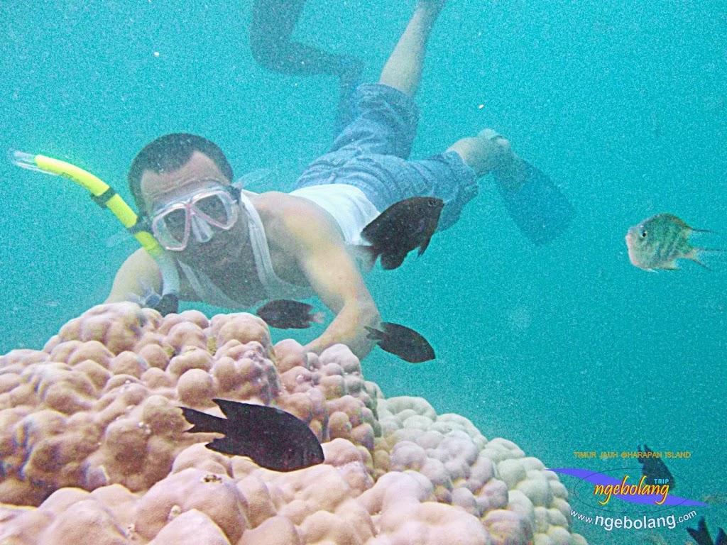 pulau harapan timur jauh 29-30 nov 2014 caklung 27