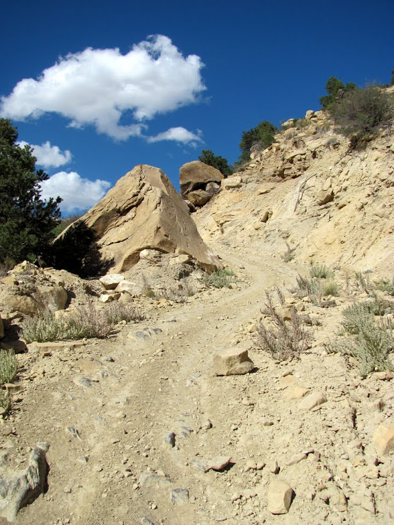 Dragon Trail