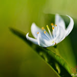 Flower 010_1280px.jpg