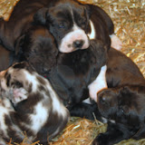 Star's girls at 3 weeks
