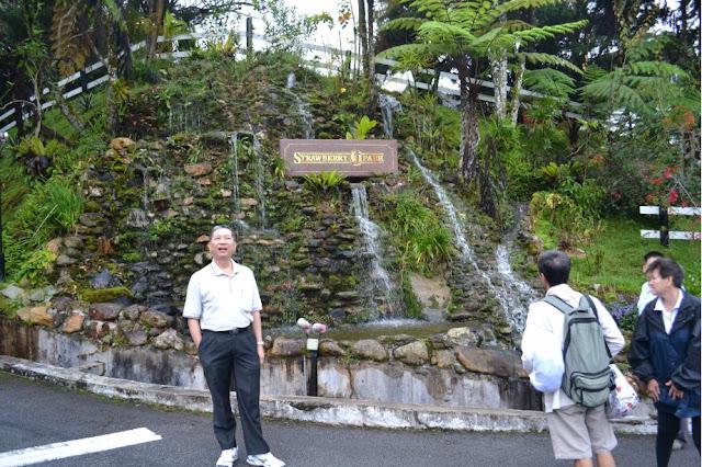 Trip-  Cameron Highland Trip 2011 - DSC_0036.jpg