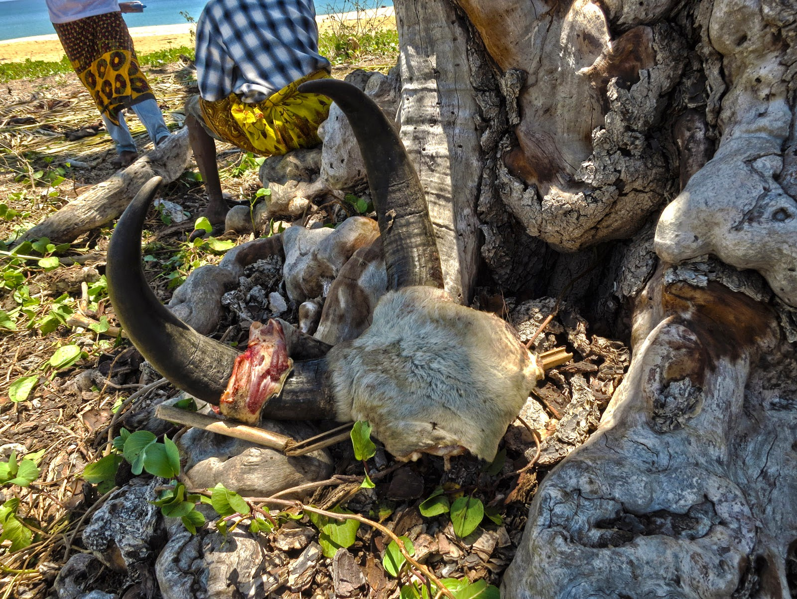 Madagascar8 - 023.jpg