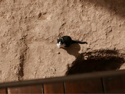 Cat in the Roman Theatre, Zaragoza.
