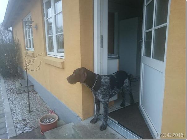 ventende hund2 160116