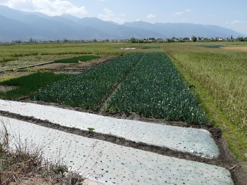 Chine. Yunnan Dali .En vélo vers le lac ERHAI - P1170751.JPG