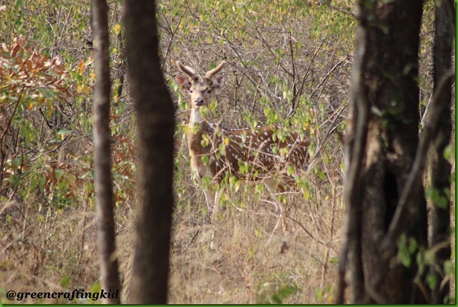 Deer hiding in bushes