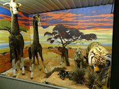 2015.12.07-015 girafes