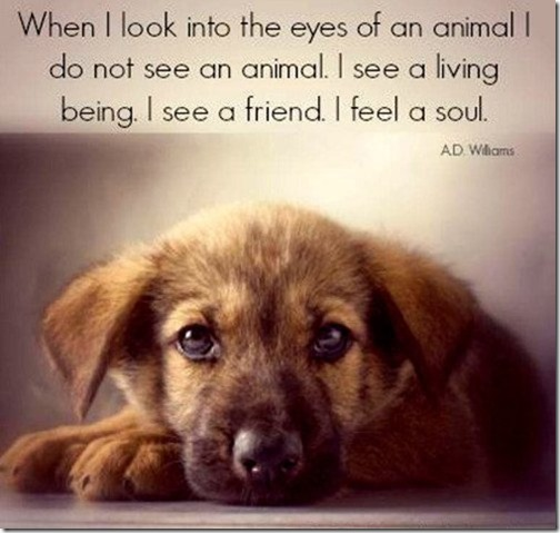 quote-about-animals-souls