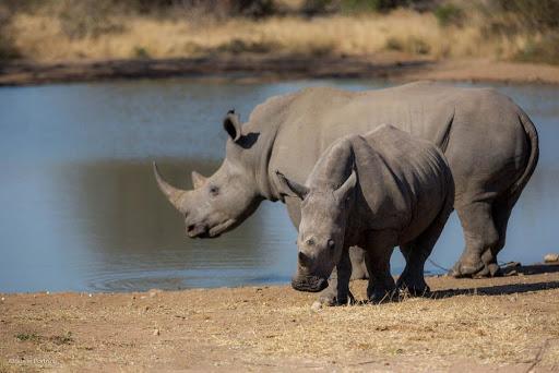 Rhino. Photo by Susan Portnoy, the Insatiable Traveler