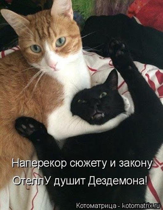 1414748312_kotomatricy-17
