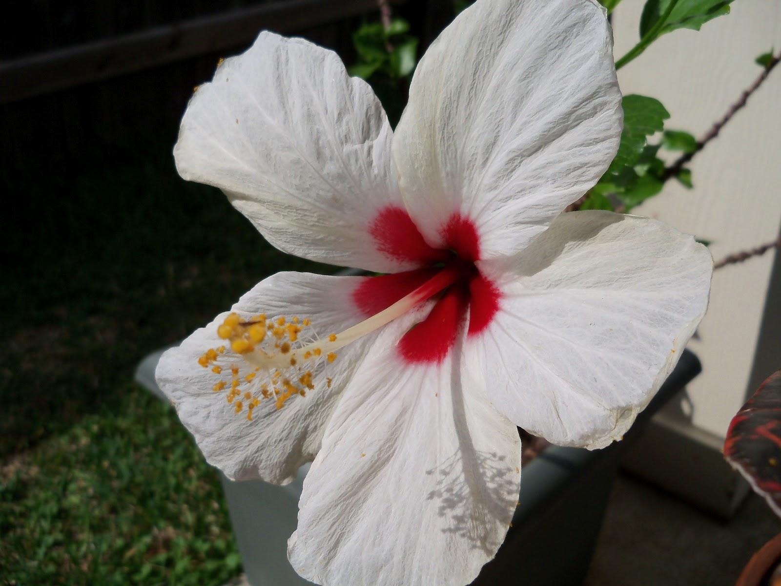 Gardening 2011 - 100_7486.JPG