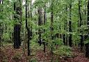 غابات واشجار