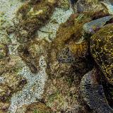 galapagos - Galapagos_FB_2-130.jpg
