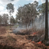 Anderson Creek Hunting Habitat - photo%2525203.JPG