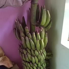 by General Knowledge - Food & Drink Fruits & Vegetables