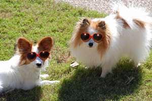 Dwa pieseły w seksi okularze