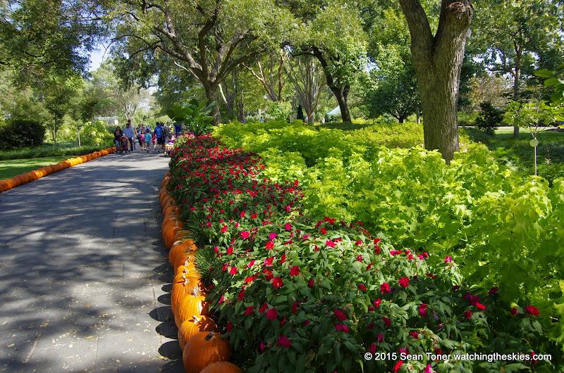 10-26-14 Dallas Arboretum - _IGP4321.JPG